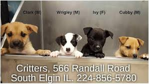 No Shed Dogs Illinois pets 566 randall road south elgin illinois 60177 224 856 5780