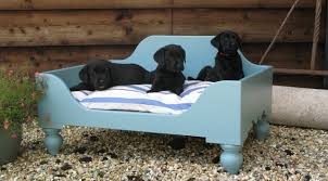 Kirkland Dog Beds by Dog Beds For Small Dogs All New Cars