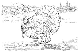 Wildlife Coloring Pages To Print IMG 95742