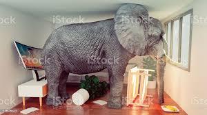 konzeptbild des elefanten der in einem kleinen wohnzimmer feststeckt und aussteigen will stockfoto und mehr bilder abgerissen