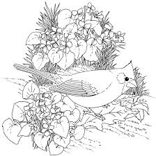 Hard Bird Coloring Pages For Adults Enjoy Printables Throughout Cardinal Page