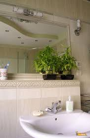 Good Plants For Bathroom by Bathroom Appealing Fresh Green Planters For Bathroom With White