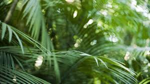 Close Up Nature Bokeh Rainforest Palm Leaves Wallpaper