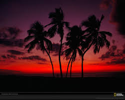 Dusk Clipart Palm Tree Sunset 4