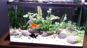Aquascape Goldfish Tank - YouTube Photo Planted Axolotl Aquascape Tank Caudataorg New To Hobby Friend Wanted Make An For As Cheap Basic Forms Aqua Rebell Huge Tutorial Step By Spontaneity James Findley Aquascaping Videos The Green Machine Aquarium Beautify Your Home With Unique Designs Aquascape Waterfall Its Called Strenght Of A Thousand Stone Youtube September 2010 The Month Sky Cliff Aquascaping 149 Best Images On Pinterest Ideas Advice Please 3ft Forum