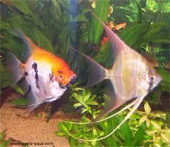 aquarium poisson prix aquarium amazonien