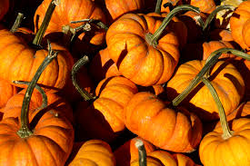 Pumpkin Patch Chatfield Denver by Fun Family Activities For Fall And Winter In Adams County