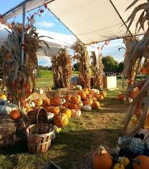 Pumpkin Patch Glastonbury Ct by Corn Mazes Foster Family Farm South Windsor Ct Home