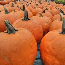 Pumpkin Farms In Fairfield Nj by The Best Spots For Apple Cider Across The Country Delish Com