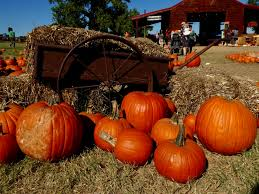Pumpkin Patch Austin Texas 2015 by Get Lost In The Maze Fall Fun At Barton Hill Farms In Bastrop Tx