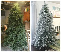 Tree Before And After