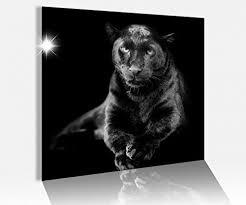 acrylglasbild 50x50cm schwarz panther jaguar tier