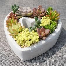coeur de en pot en forme de coeur intérieur jardin d herbes aromatiques pots en