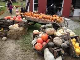 City Of Pomona Pumpkin Patch by The 27 Best Farms For Apple U0026 Pumpkin Picking Near Nyc New York