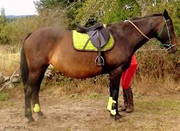 ou trouver un équipement vert pomme 1 forum cheval