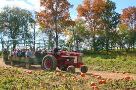 Great Pumpkin Patch Frederick Md by Jumbo U0027s Home