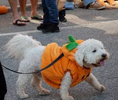 Damariscotta Pumpkin Festival by 6 Dog Friendly Fall Events In Maine That Your Harvest Hound Will