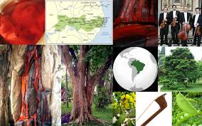 100 Pau Brazil Wood A Country A State And A Tree Of Pride And Beauty