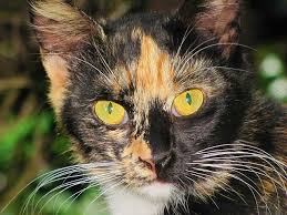 russian cat names russian cat names cat names city