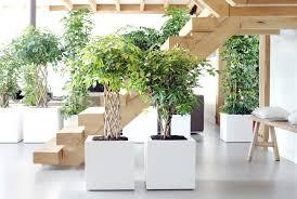 bäume für alle pflanzenfreude