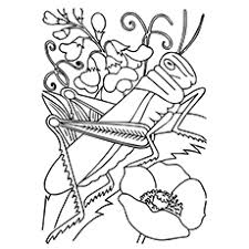 Red Legged Grasshopper Coloring Page