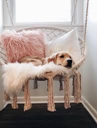 netter welpe dogpetpuppyideas schöne hund haustier
