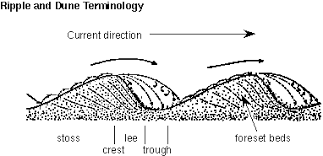 Trough Cross Bedding by Geology 135 Sedimentation Sedimentary Structures