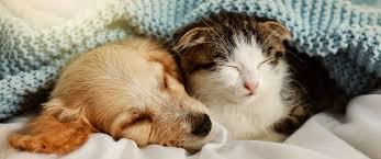 hund oder katze im eigenen bett