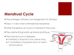 Uterus Lining Shedding Period by Menstruation 101 A Crash Course On Everything You Need To Know