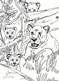 Free Realistic Coloring Pages Of Lioness For Adults