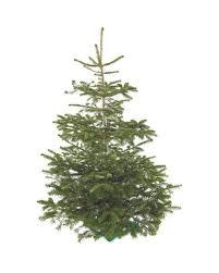Nordmann Fir Christmas Trees Wholesale by Aldi Is Selling A 6ft Nordmann Fir Christmas Tree For Less Than