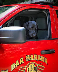 Should Beacon Ride In The Bar Harbor Fire Truck ? [POLL] Fire Engine Has Been Transformed Into A Mobile Pub Storytrender 2018 New Product Police Truck Ambulance Warning Lights Buy Unique Bar To Open In Putinbay Village Daily Firetruck Bbq Vinyl Vehicle Wrap Alabama Pro Auto And Boat Northwestern Media Pin By Hasi74 On Hasisk Auta Pinterest Trucks Trucks 1997 Pierce Saber Custom Pumper Used Details Last Resort Engine Company Opens For Business American Lafrance Youtube French Stock Photos Images Alamy Harbor Department Editorial Photo Image Of Flag Best Halligan Collection The