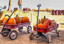 Pumpkin Patch Sacramento 2015 by Pumpkin Patch Hedge Rd Sacramento Car