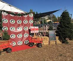 Boy Scout Christmas Tree Recycling San Diego by Best Christmas Trees In Town Mr Jingles Christmas Trees