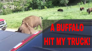 Custer State Park A Buffalo Hit My Truck - YouTube Volusia Races Screw Consistency My Badass Husband Youtube Mytruckparkingcom Let Me Just Park My Full Size Truck In A Compact Spot So That The Hey Dude Blocking Driveway Is It Really Hard To Be 1995 Ford Explorer Xlt Truck And Ranger Food Association Says Proposed Regulations Prime Inc Tanker I Wanna Go Home Please Do Not Park Too Closeaccess Wheelchair Disabled Window Oh Dont Mind Ill Under Your Fiseven As Moving Right Front Of Traffic Light Info Carlosauto111 Twitter Euro Parking Android Apps On Google Play