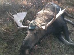Moose Shed Antler Forums by Alaska Moose Hunting U2013 Mission Alaska