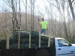 Fraser Fir Christmas Trees Nc by North Carolina Cooper U0027s Tree Farm