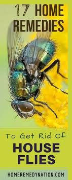 25+ Unique Fly Remedies Ideas On Pinterest | Flies Repellent ... How To Get Rid Of Flies In Backyard Outdoor Goods Diy Using Pine Sol To Of House Youtube 25 Unique What Kills Fruit Flies Ideas On Pinterest Pest Keep Away Repellent Rid Rotline Do I Get Solana Center For 3 Ways Around Your Dogs Water And Food Bowls Fruit Kill Do You Chicken Coop For Happier Hens Coops Those Pesky Flies From Pnic Areas Easy Home Remedy Coping With The Fall The New York Times Outdoors Step By