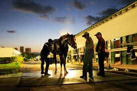 Halloween 2 2009 Castellano by What Time Is The Pegasus World Cup What Are The Betting Odds