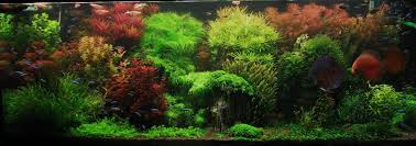 Star Wars Fish Tank Decorations by 100 Star Wars Tank Decorations Build Your R2 D2 1 2 Scale