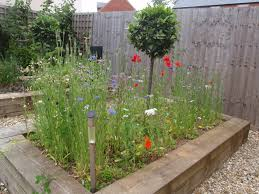 Garden Design: Garden Design With Create A Wild Flower Meadow Just ... Free Images Blossom Lawn Flower Bloom Backyard Botany Go Native Or Wild News Creating A Wildflower Meadow From Part 1 Youtube Wildflower Garden Update Life In Pearls And Sports Bras Budapest Domestic Integrity Field Of Wildflowers She Shed Decorating Ideas How To Decorate Your Backyard Pics Best 25 Meadow Garden Ideas On Pinterest Rockoakdeer Neighborhood For National Week About Texas A Whole Wildflowers For Tears The Duster Today Fields Flowers Design With Apartment Balcony