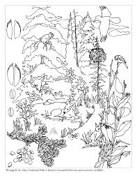 Brilliant Woodland Forest Coloring Pages With Rainforest And