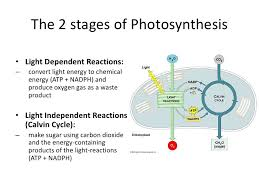 3 8 8 2 synthesis PPT