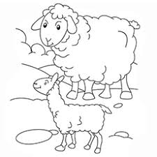 The Mamma And Baby Sheep Coloring