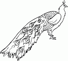 Feathers Coloring Page Gift Wall Art Line Drawing Feather Pages