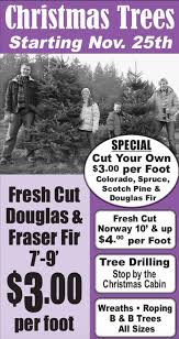 Fraser Christmas Tree Cutting by Christmas Trees Dimmick U0026 Sons Nursery