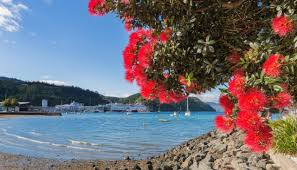 Christmas Tree Species Nz by Now Aussies Are Claiming The Pōhutukawa Newshub