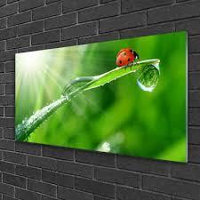 design stil acrylglasbilder 100x50 wandbild druck gras