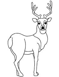 Mosaic White Tailed Deer