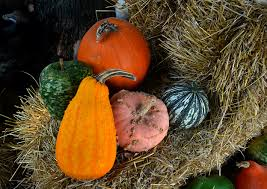 Pumpkin Farm Maryland Heights Mo by Perryville Pumpkin Farm Cape Girardeau History And Photos